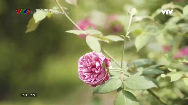 Lạc bước vào vườn hoa hồng hơn 1ha ở Hà Nội - Ảnh 2.