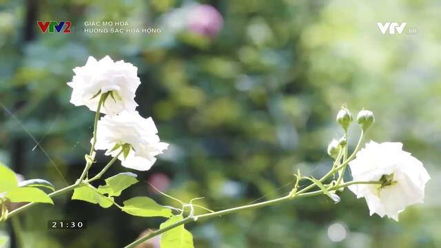 Lạc bước vào vườn hoa hồng hơn 1ha ở Hà Nội - Ảnh 3.