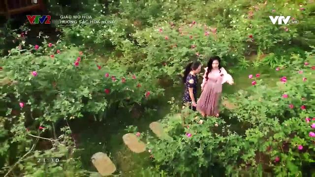 Lạc bước vào vườn hoa hồng hơn 1ha ở Hà Nội - Ảnh 4.
