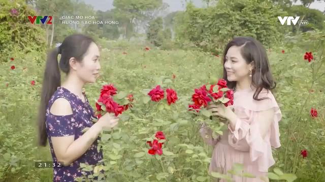 Lạc bước vào vườn hoa hồng hơn 1ha ở Hà Nội - Ảnh 5.