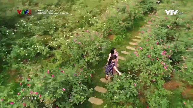 Lạc bước vào vườn hoa hồng hơn 1ha ở Hà Nội - Ảnh 6.