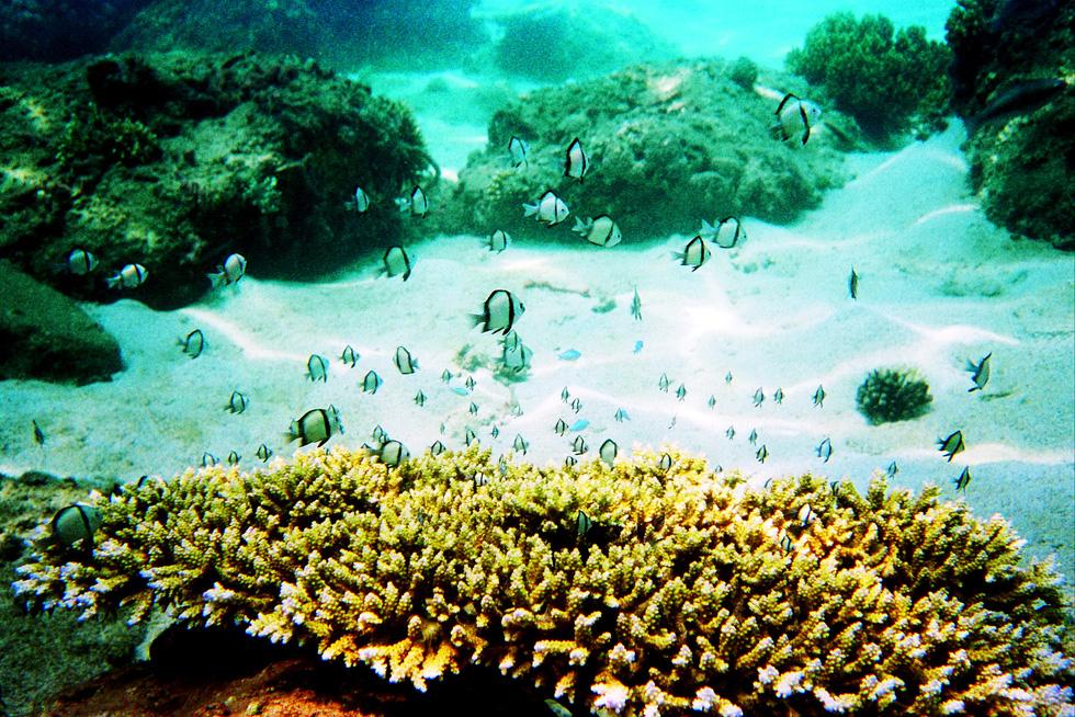 Hè đến rồi, lặn biển ngắm san hô nào! - Ảnh 1.
