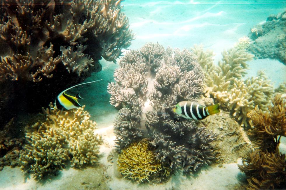 Hè đến rồi, lặn biển ngắm san hô nào! - Ảnh 5.